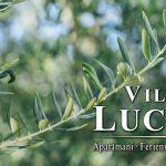 Alte Olivembäume